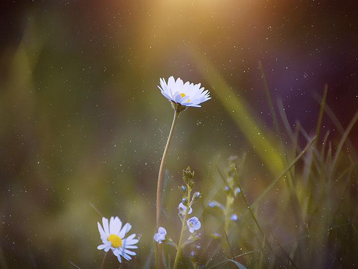 Dacapo--Reciclar-flores